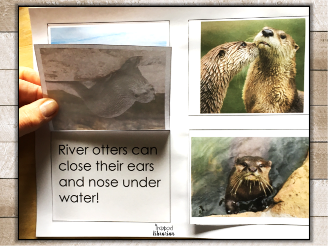 Research Skills for 2nd and 3rd Grades River Otter